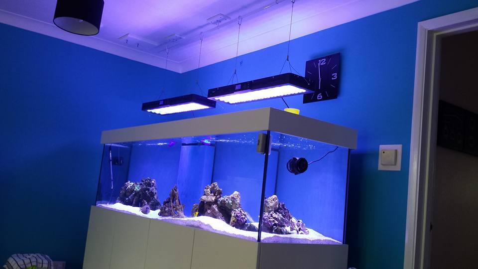 84x24x24-marine-aquarium-blue_
