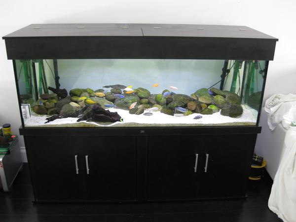 fish-tank-01