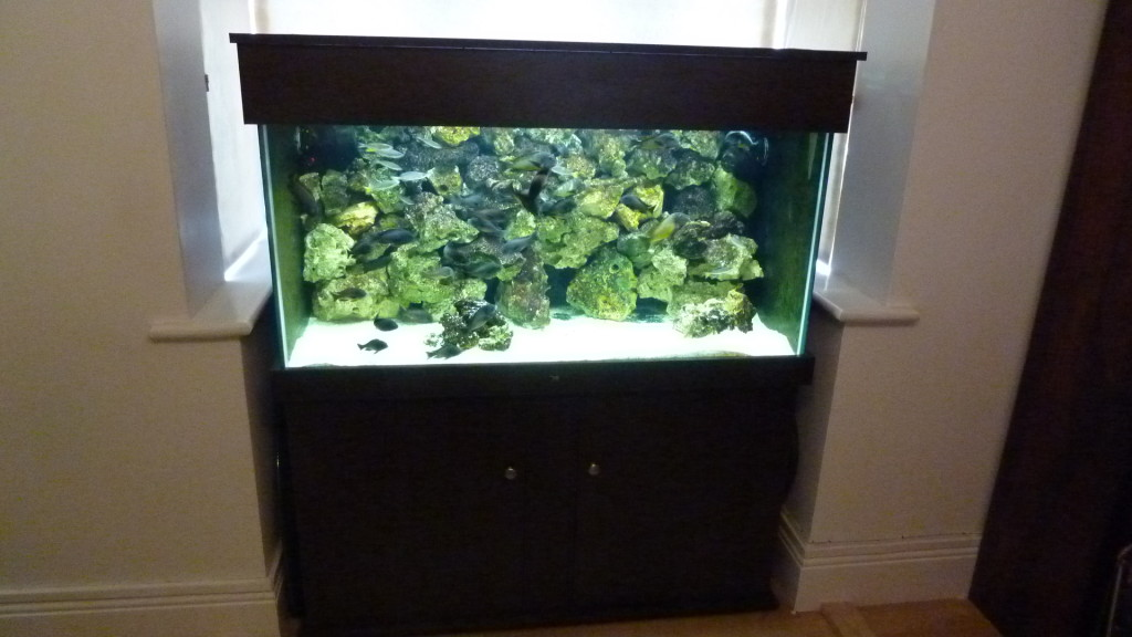 Fish tank 5 for How to set up fish tank