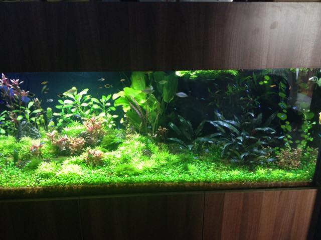 planted-tank