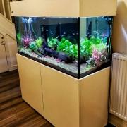 48x24x18-tropical_fishtank_2018