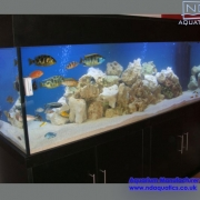 72x24x24_tropical_aquarium