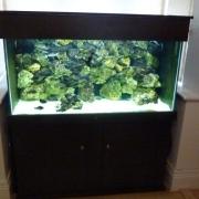 fish-tank-5