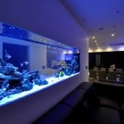 marine-fish-tank-05_12_16