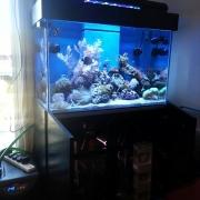 nd-aquariums-3