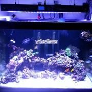 nd-aquariums-4
