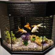 nd-aquatics-corner-tank-58x54x58