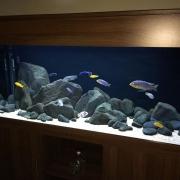 nd-fish-tank-5