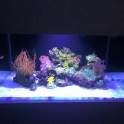 nd-fishtank