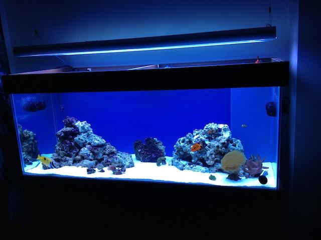 Aquarium background blue vs black 55 vs 65 page 2 for Discount aquarium fish and reef