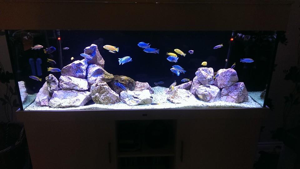 Background colour aquarium manufacturers nd aquatics ltd for Black light for fish tank